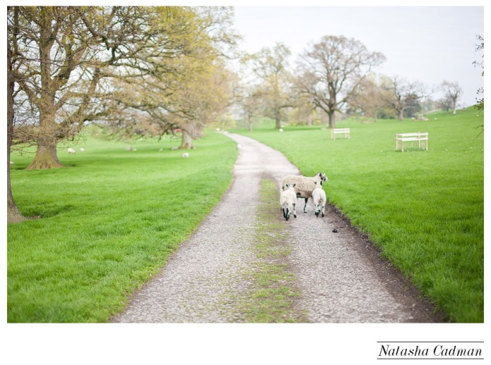 Swinton Park photographer, modern wedding photographer leeds, Yorkshire Wedding photographer, natural light photographer leeds,